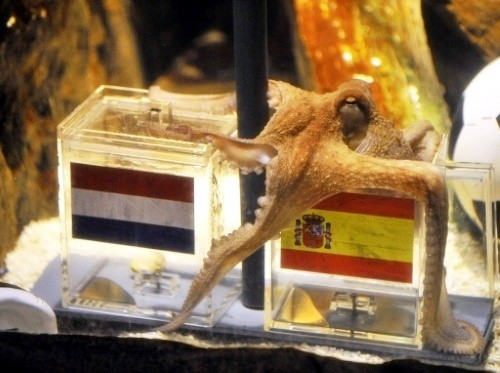 Paul the octupus predicts a Spanish victory