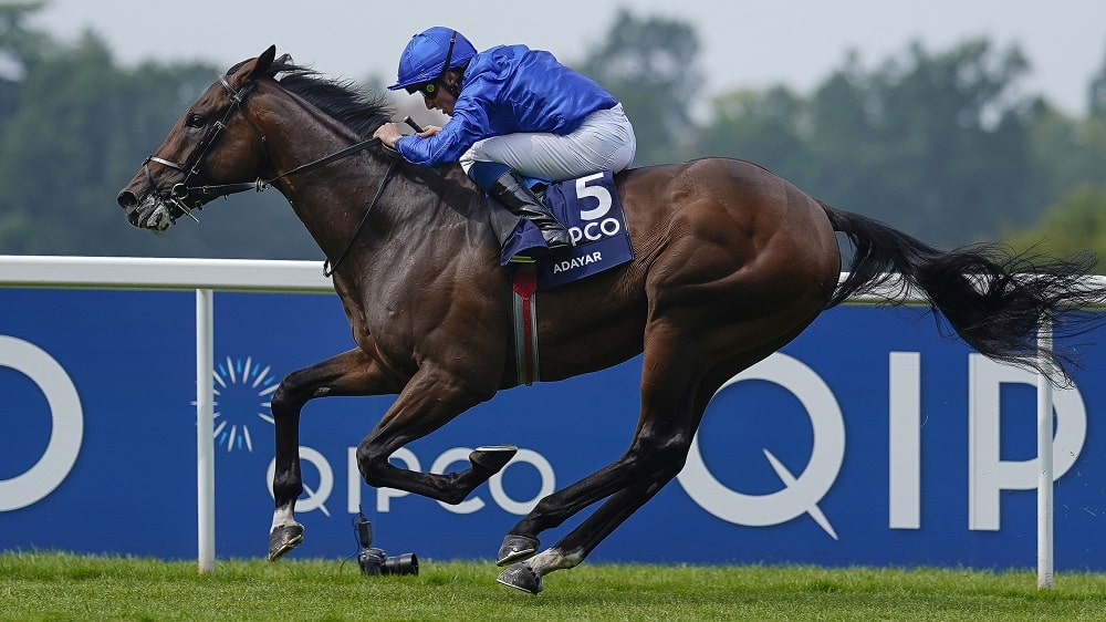 QIPCO Champion Stakes 2021 preview and betting tips from Ascot feature Adayar