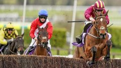 Down Royal Champion Chase 2021 preview Minella Indo